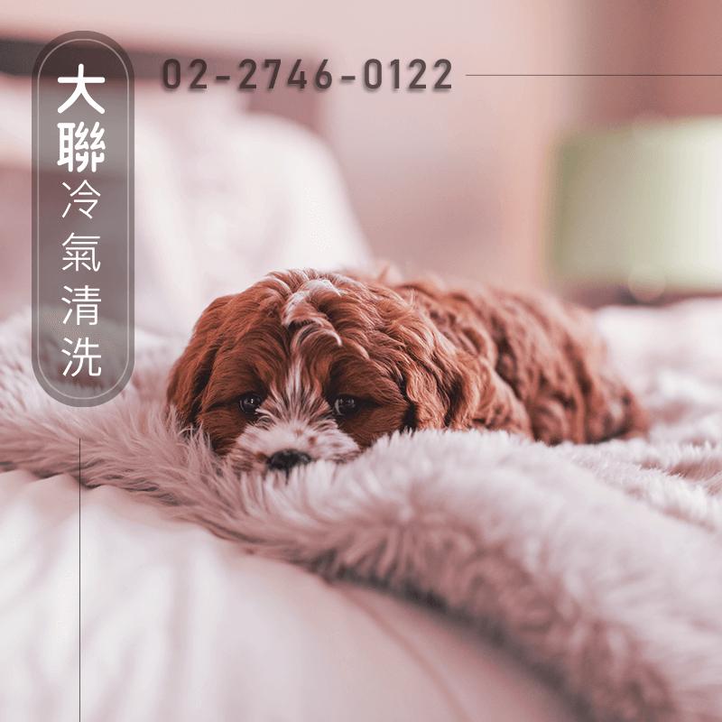 台北三洋冷氣清潔費用|歡迎委託大聯來清潔冷氣(02)2746-0122